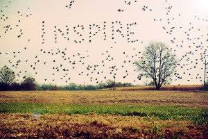 INSPIRE_DESENHO